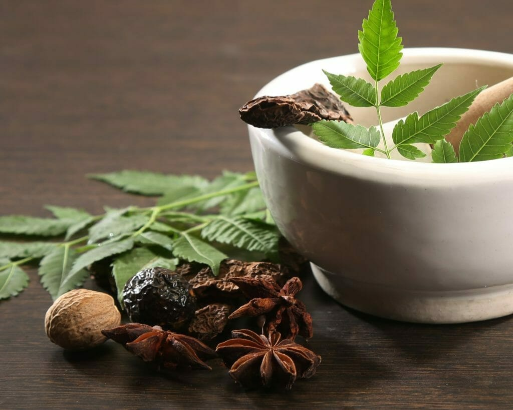 Ayurvedic Herbs that Prevent and Treat Drug Resistant Bacteria
